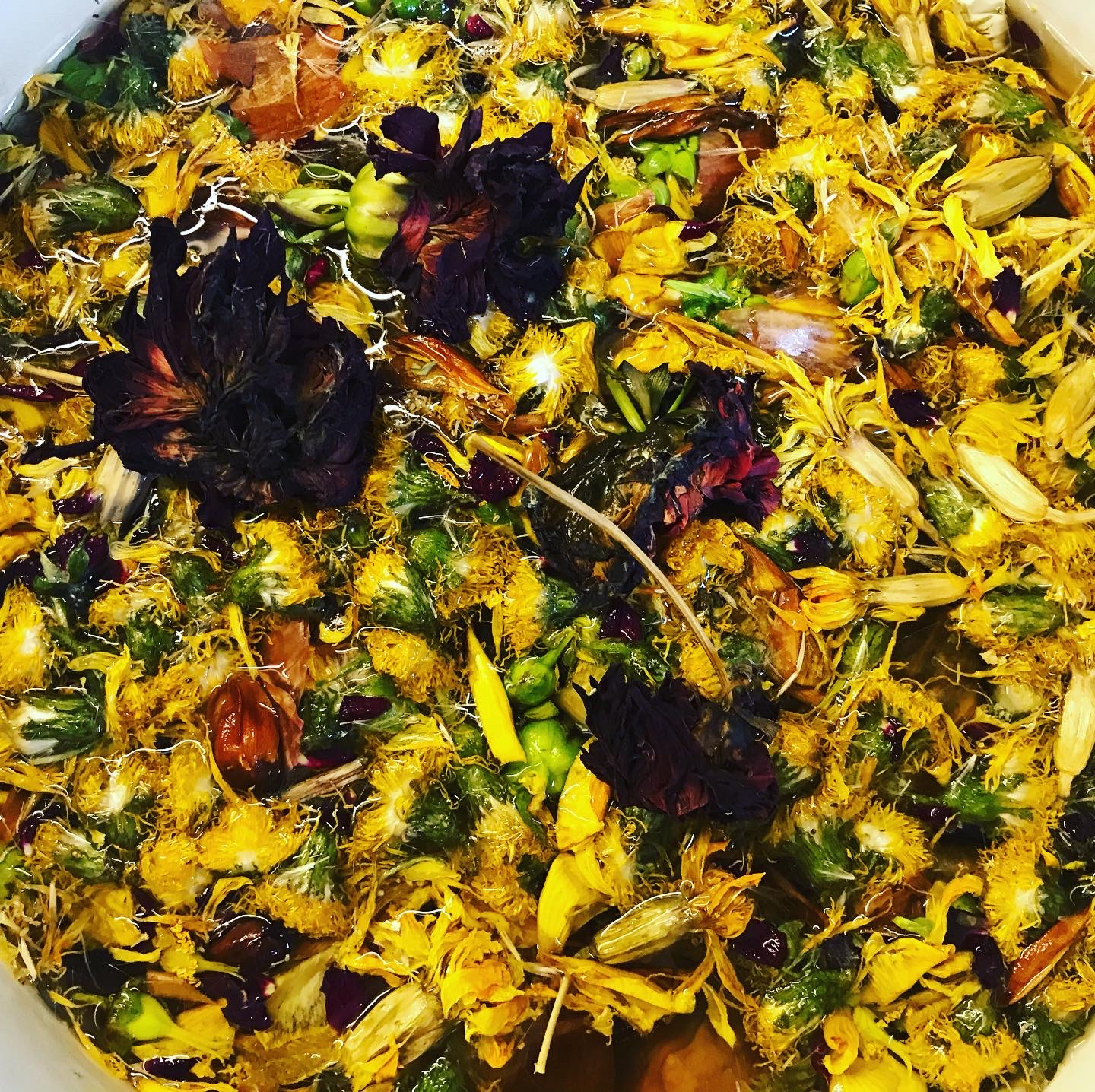 Flowers in a dye pot