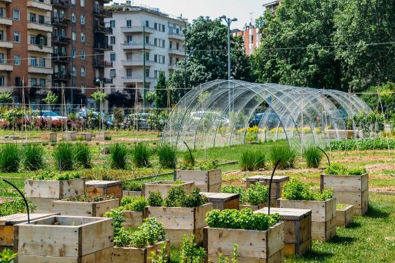 How cities can fight food loss and waste