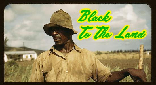 Black To The Land Header