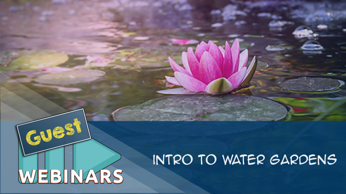 RECORDED WEBINAR:Intro to Water Gardens