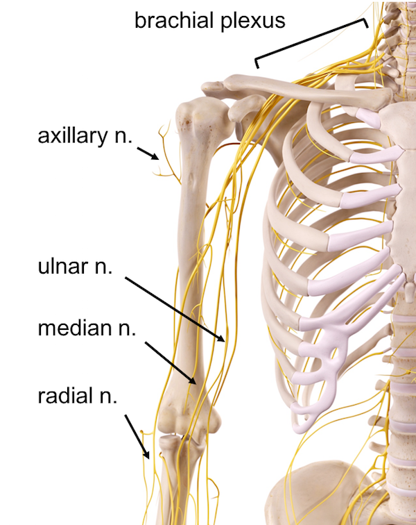 thoracic outlet syndrome anatomy