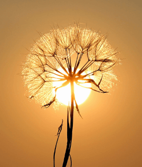 Summer sun Magick