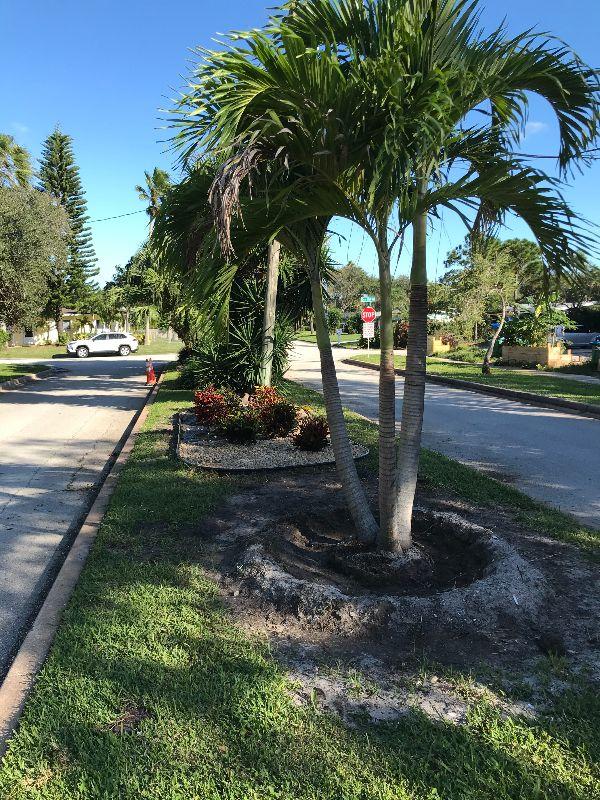 palms in medium along roadway