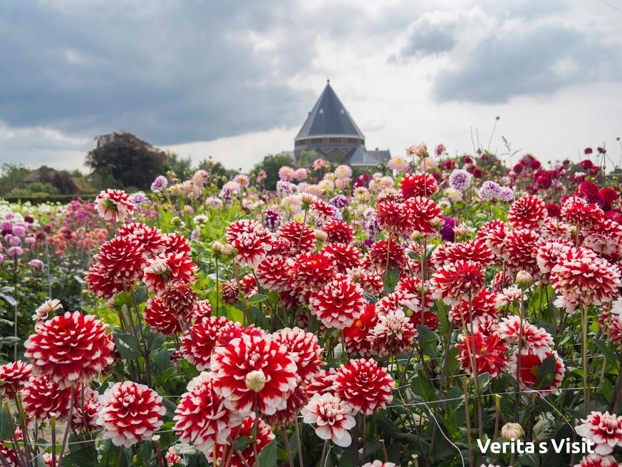 Flores de Verano en Holanda