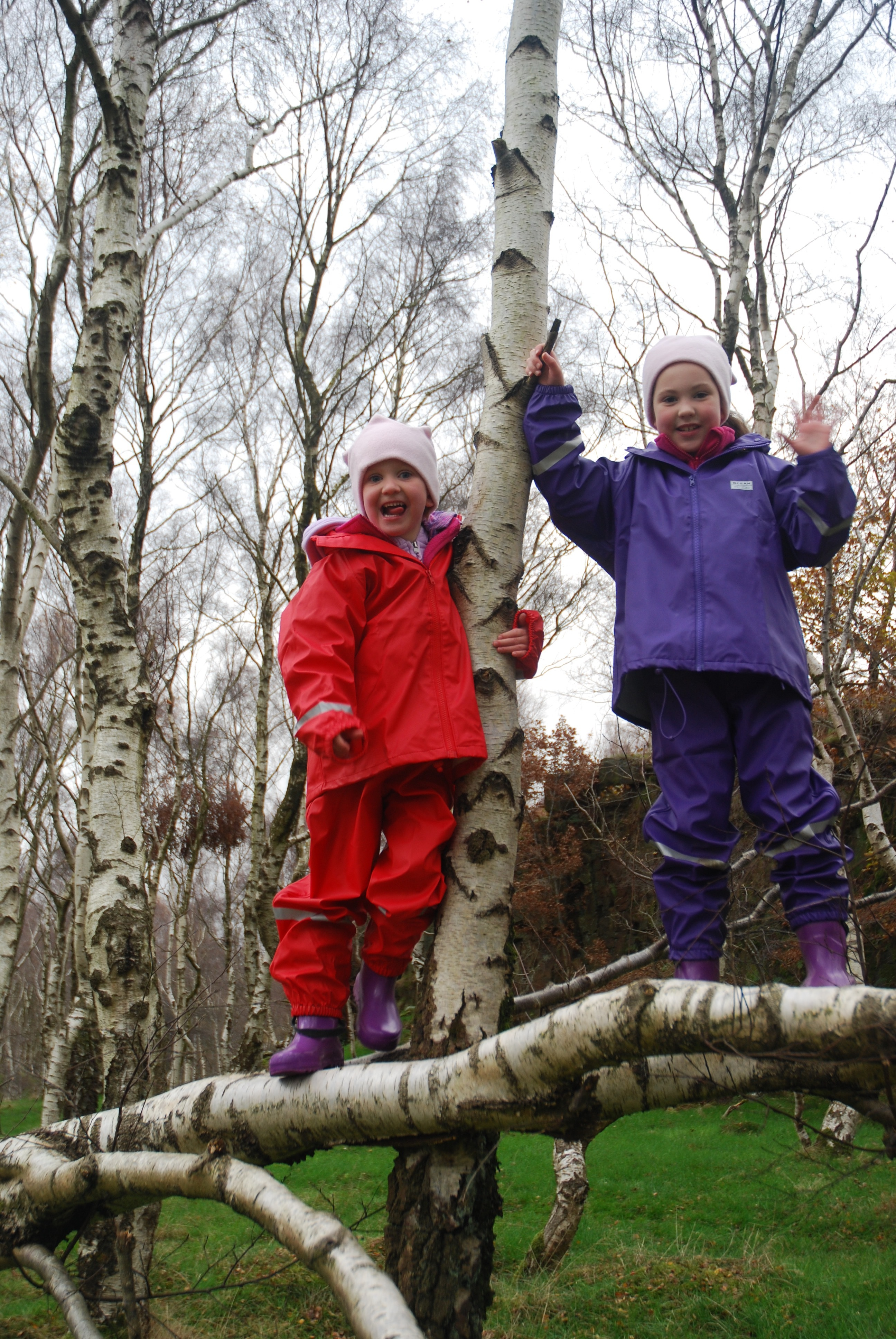 girl in purple rainsuit and girl in red rainsuit, balancing on a tree branch and holding on to the trunk of a birch tree