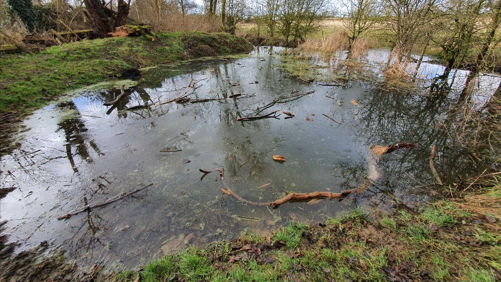 Snakemoor pond with many logs and sticks that have been thrown in