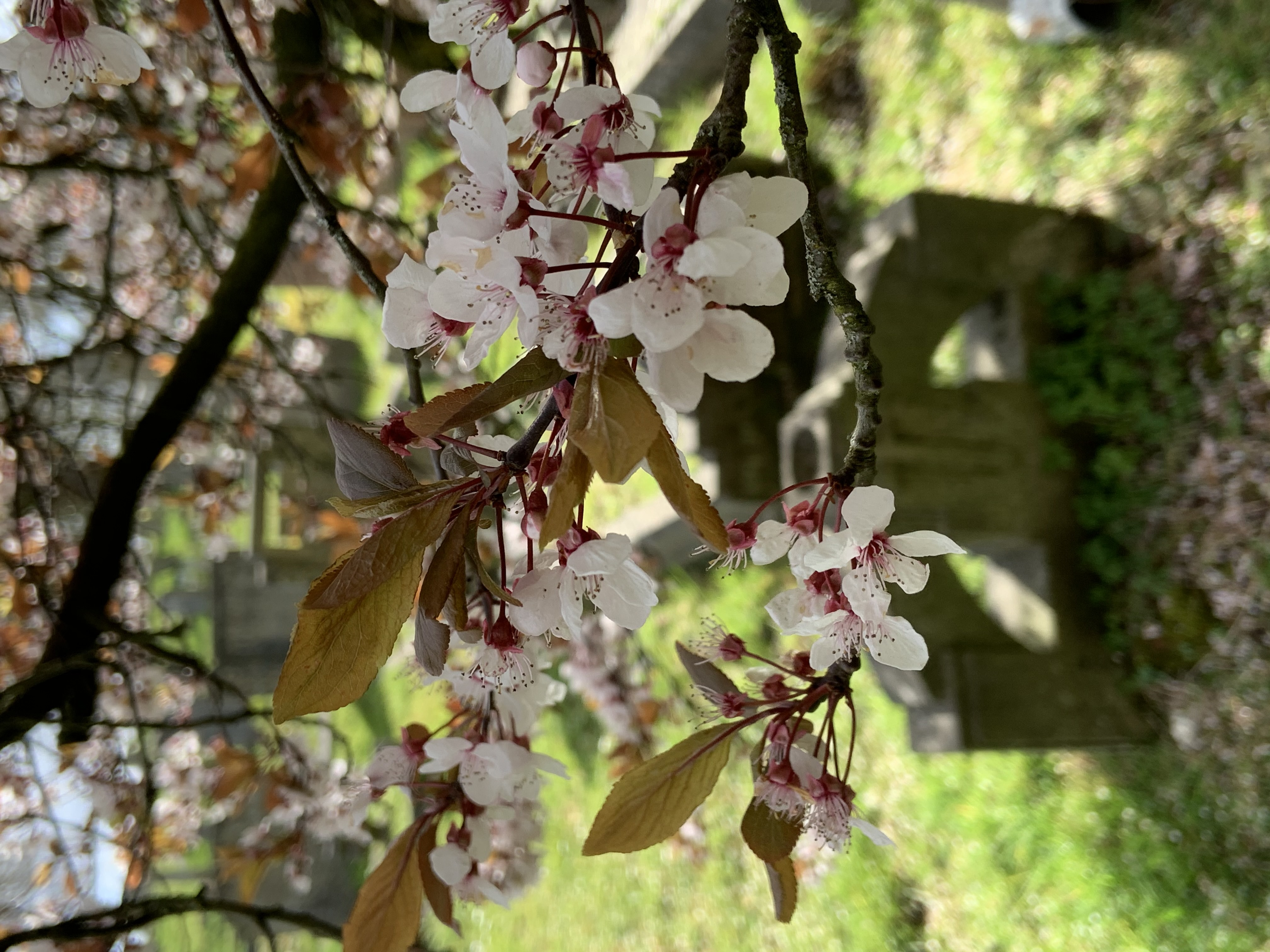 Branch with blossom