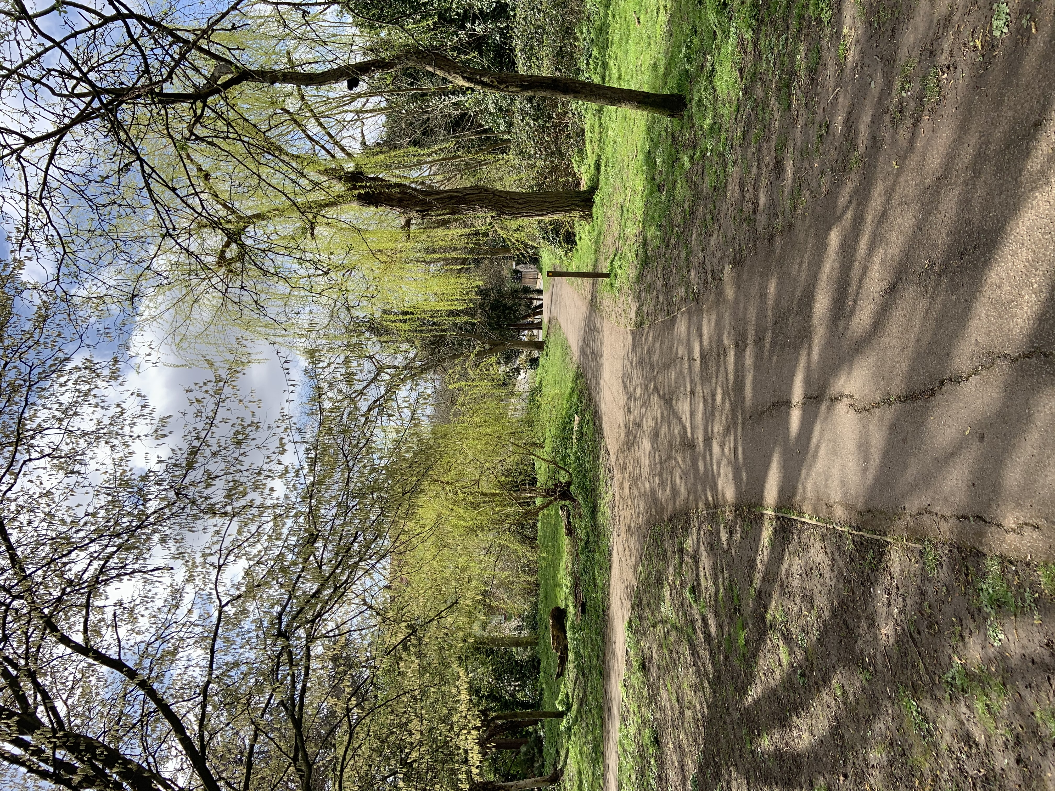 Path through Brenchley Gardens with willows turning green ahead.