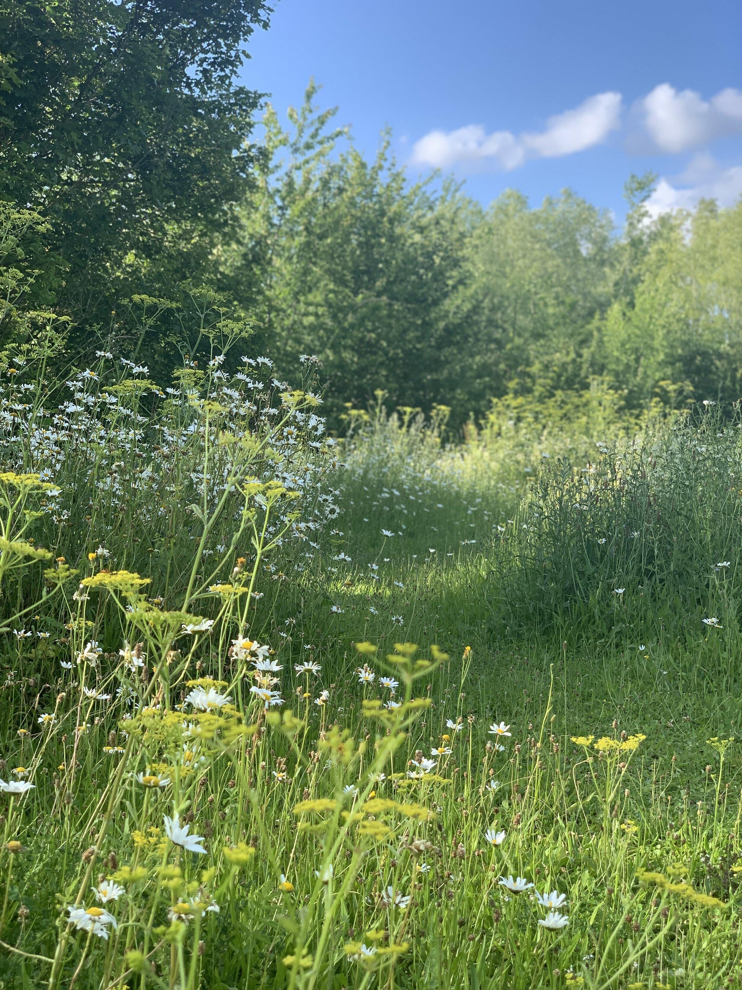 Image of the Arbory Trust Meadow