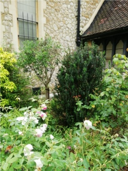 Roses by porch in churchyard