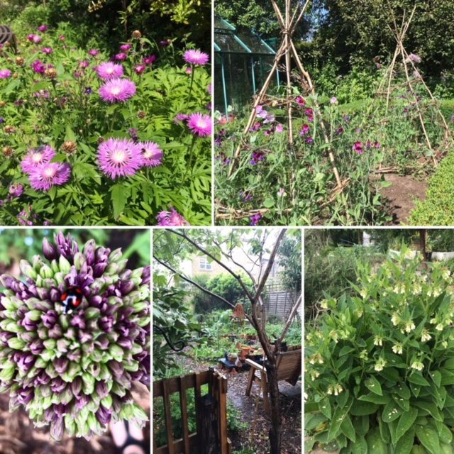 Photos of flowers growing in garden, tree with garden gate, sweet peas growing up cane pyramids