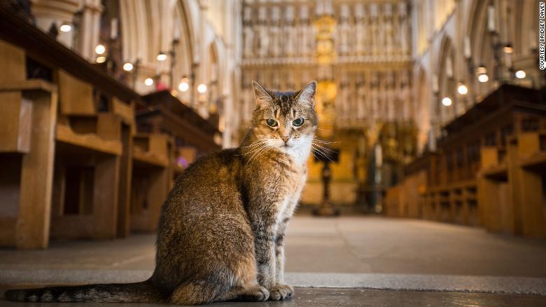Cat (Doorkins Magnificat) in Southwark Cathedral