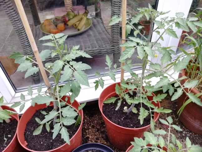 Plants in Martin's garden
