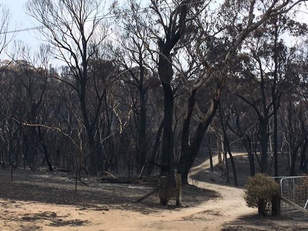 Burnt Australian bush