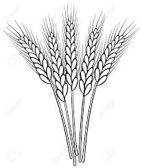 drawing of heads of wheat