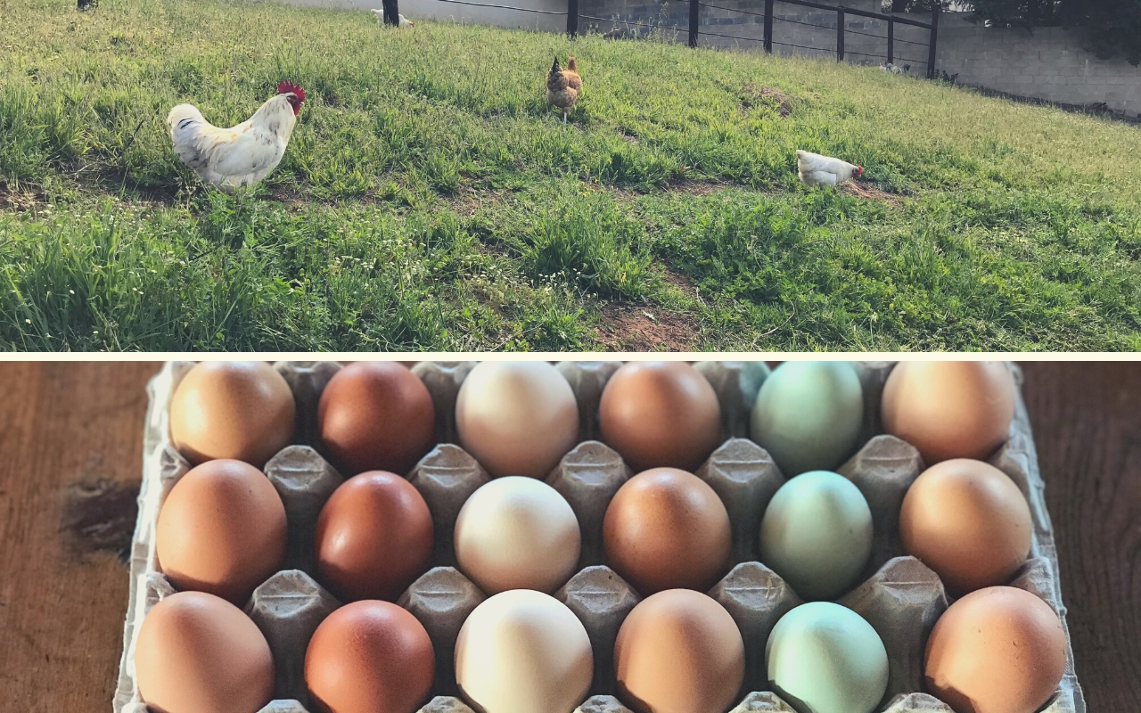 We welcome new eggs to our table!