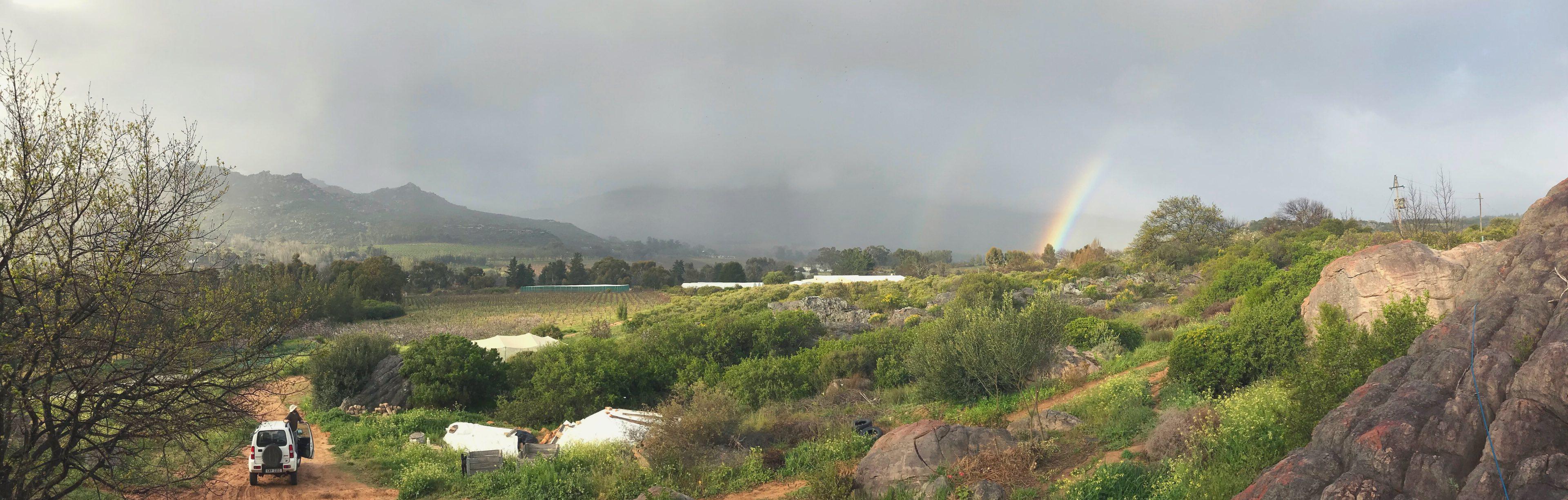 Rainbows on the farm!