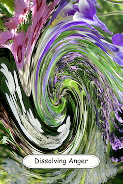 Dissolving Anger living flower essence fusion