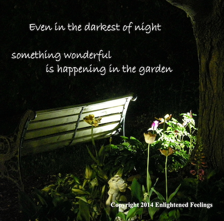 Even in the darkets of night, something wonderful is happening in the garden