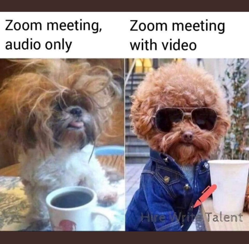 "A dog with messy hair and a line ""zoom meeting, audio only"" on the left, and a dog with a jacket and sunglasses with the line ""Zoom meeting, with video"
