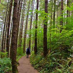 Pair of Hikers Walking along Trail (courtesy US Natl Forest Svc)