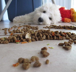 Dog on Floor with Food (BuzzFarmers via Flickr)