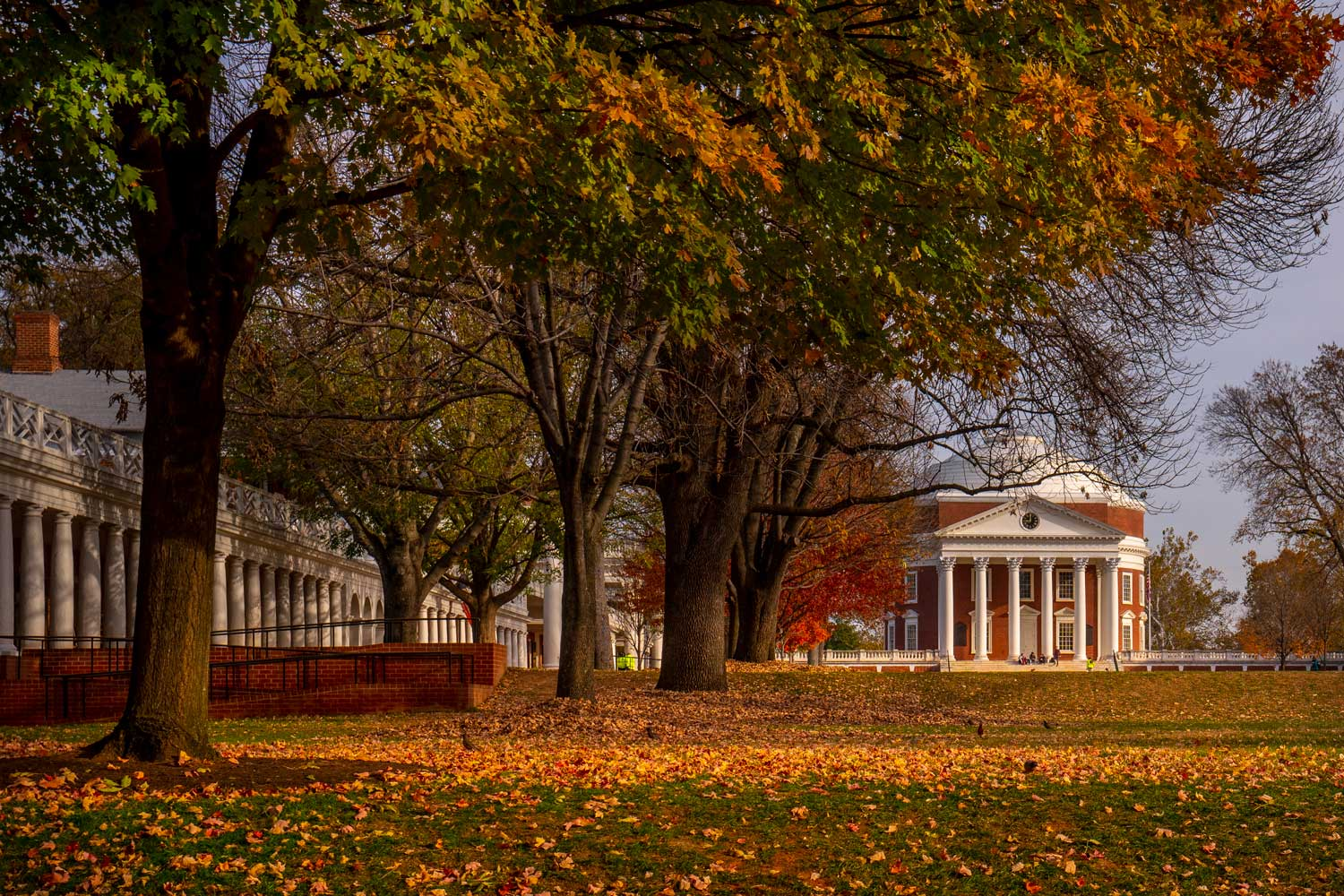 photo of the Lawn and Rotunda in Fall