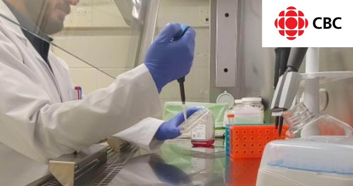 McMaster University researchers use animal cells to cultivate meat in a lab
