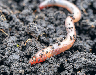 Wiggly roboworms can sense own position and movement in space