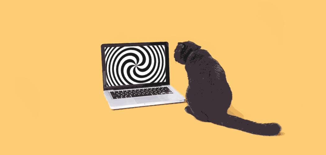 Black cat looking at hypnotizing image on laptop