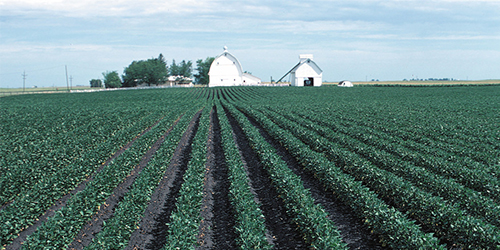 A team of researchers in Penn State's College of Agricultural Sciences examined the long-term impact of soybean diseases on production in the U.S.  IMAGE: LYNN BETTS/USDA
