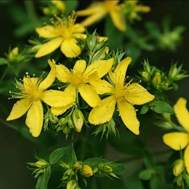 photo of yellow flowers