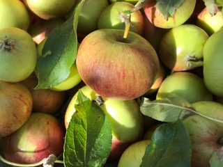 Photo of some apples