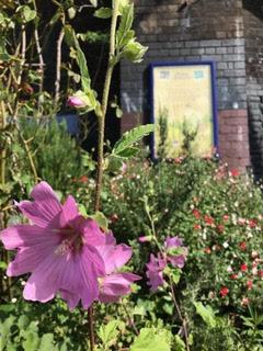 Photo of Platform 1 Cottage Garden