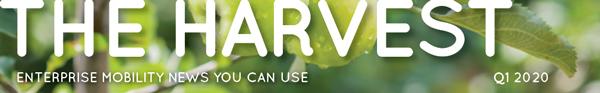 The Harvest   Q4 2020