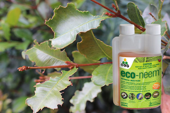 eco-neem