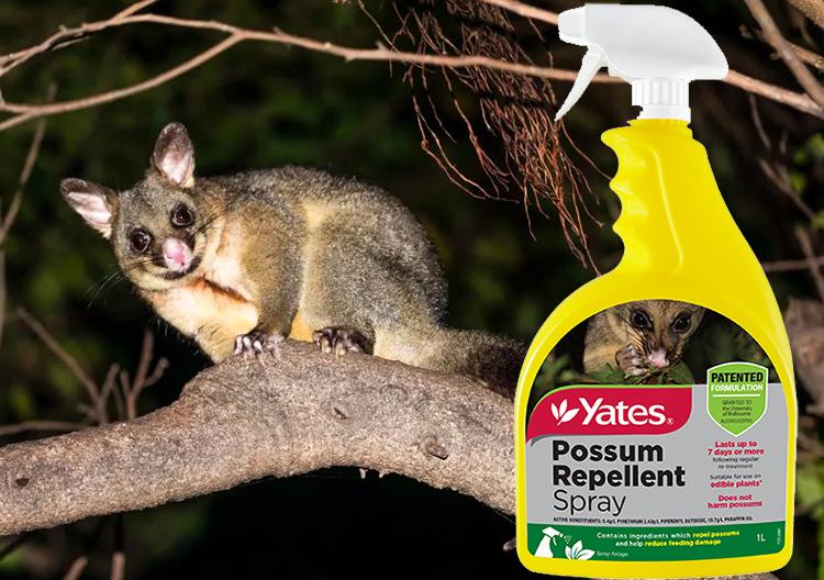 Yyayes possum repellent