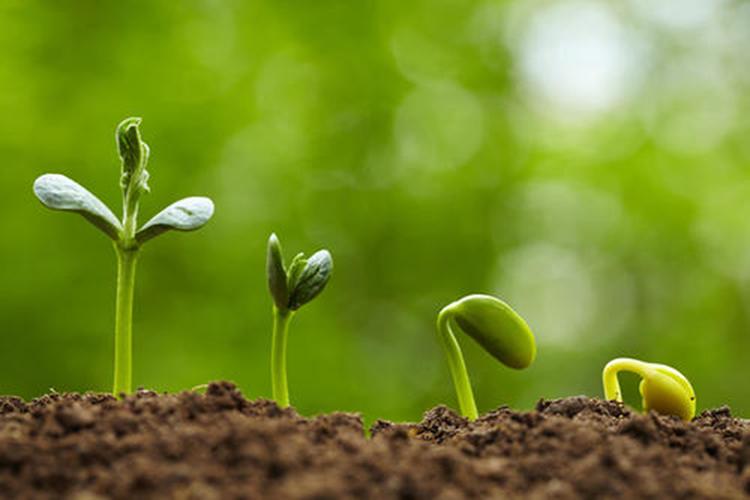 Neutrog seeds germinating