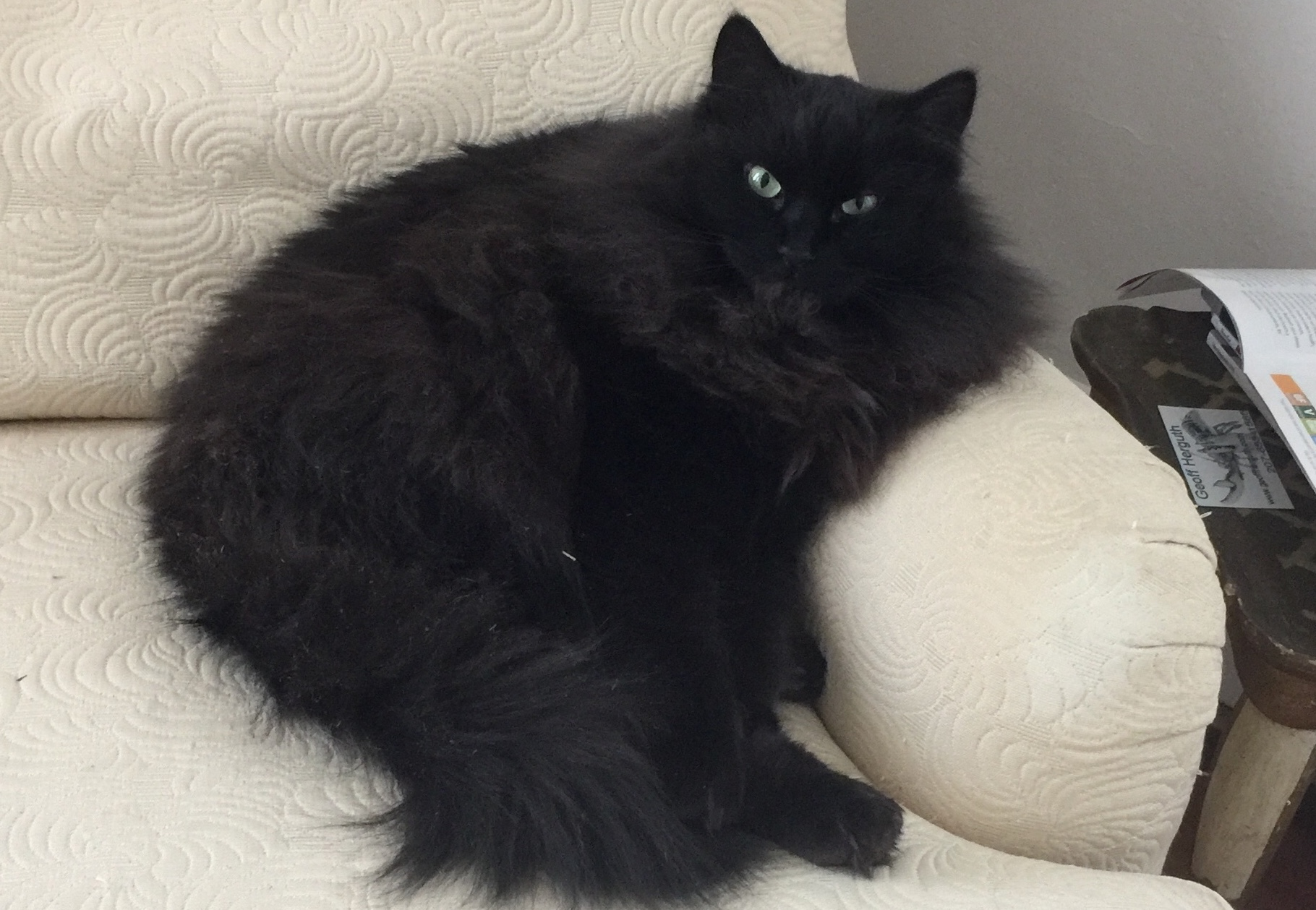 Hobie cat