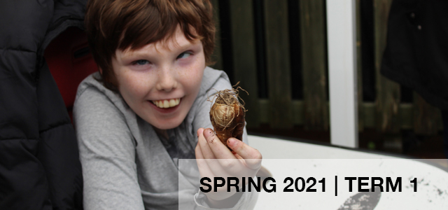 Young boy holding a daffodil bulb and he is in a wheelchair