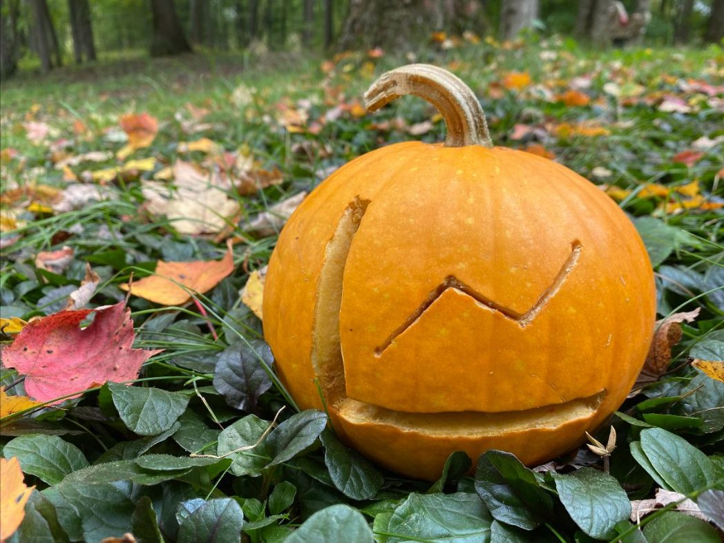 UX research carved pumpkin