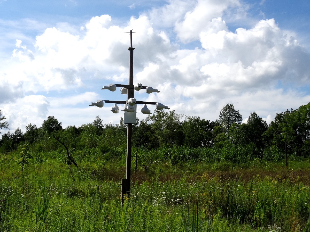 A structure in a prairie field holding many white bird houses