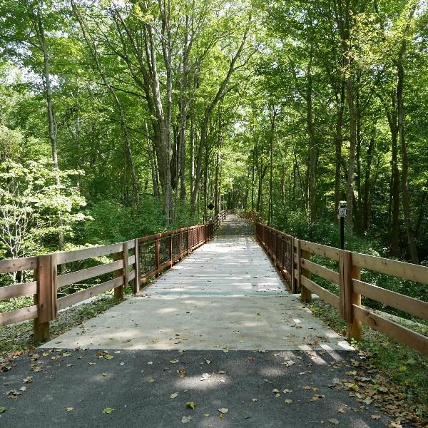 bridge leading through a green forest