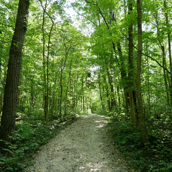 gravel path in a bright green forest