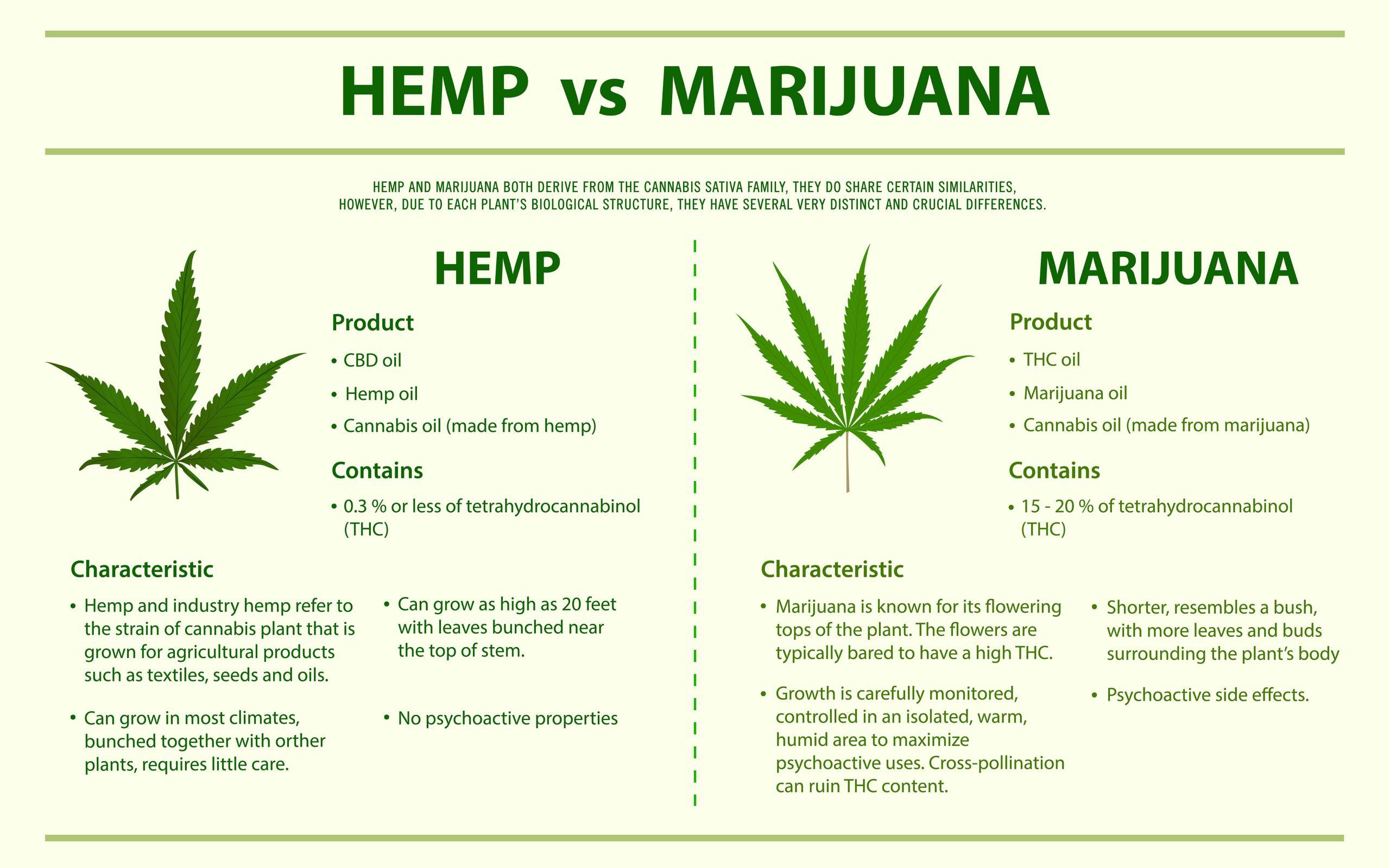 Description of Hemp versus Marijuana