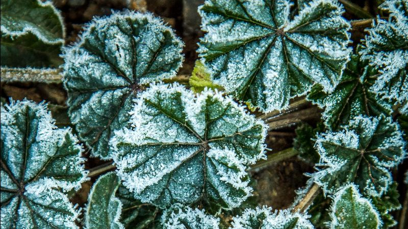 Details of frosted plant life on the James Ranch near Durango, Colorado in the Animas River Valley.