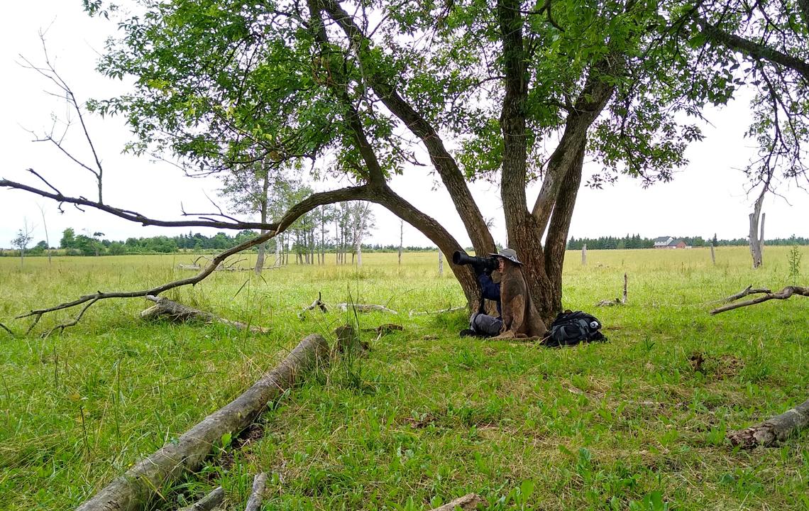 Xuan Zhang photographing eastern meadowlarks