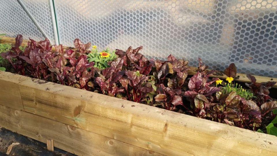 Inside a Keder Greenhouse