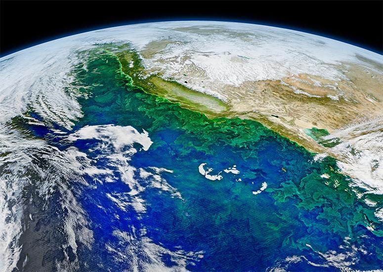 Satellite image of algae bloom