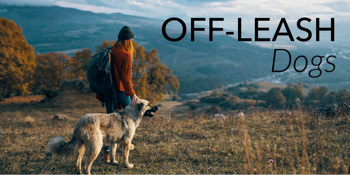 Off-Leash Dogs graphic